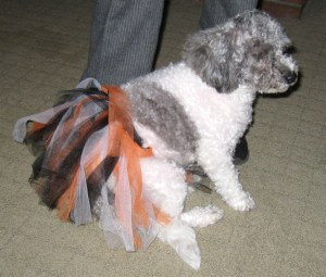 Last year's humiliating Halloween skirt. Daisy was mortified!