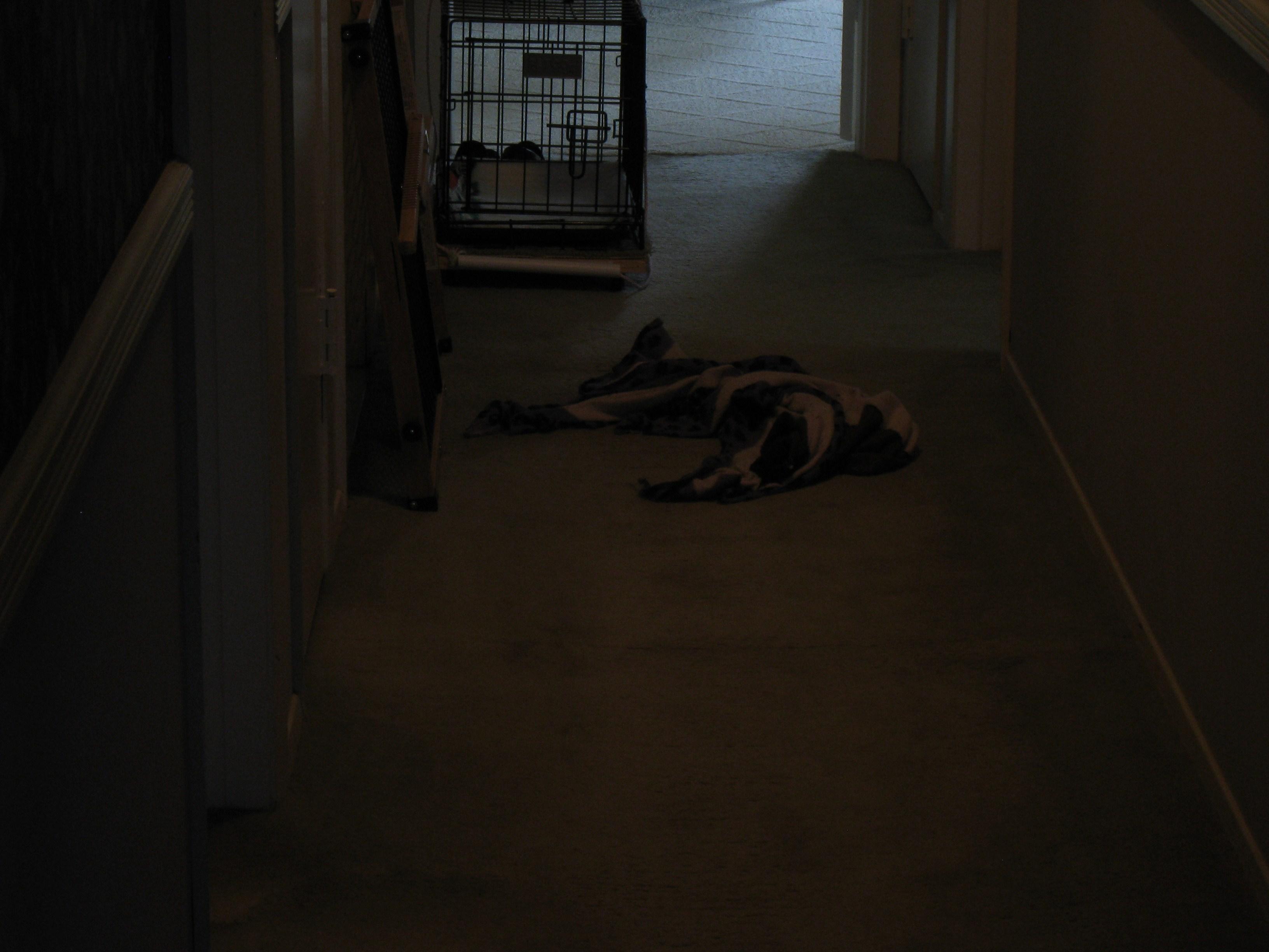 blanket dog 2
