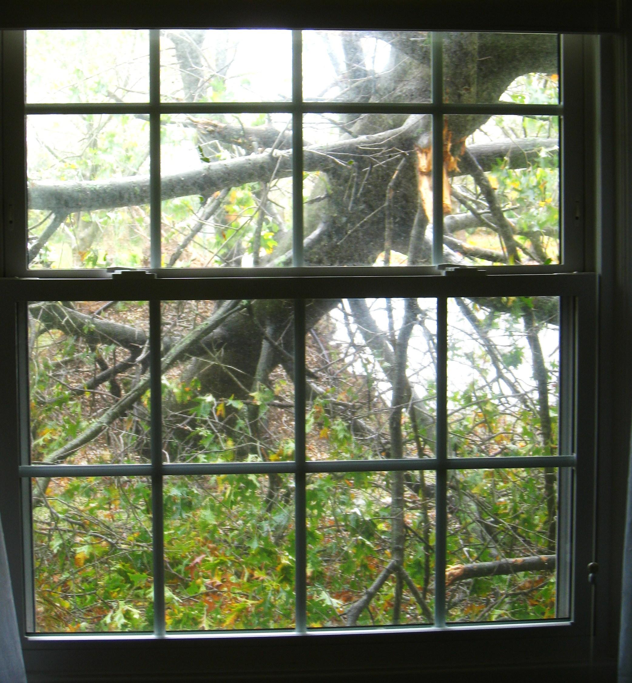 hurricane-damage-tree-right-front-window
