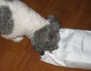 Hey! Was there a roast chicken in this bag? Where'd it go? Maybe some juices spilled that I can lick up....