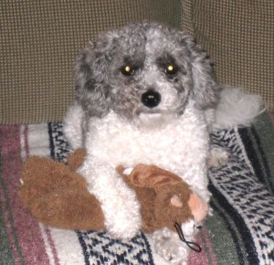 I'm just hangin' out with my toy until Mom gets me back into the blog world....