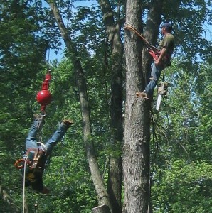 Look at this crazy guy! He stretched himself out into an inverted cross shape while being pulled to the top of the tree!