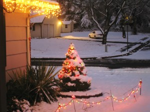 I love the look of colorful Christmas lights gleaming through the snow. These are in our front yard.