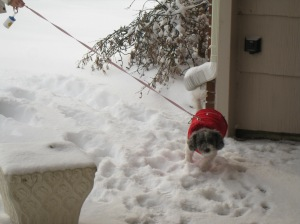 I don't want to go in the snow!