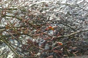 spring snow 4.14 2
