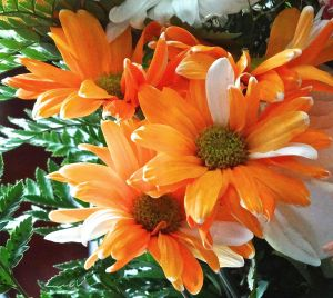 These daisies remind me of orange-creamsicles! Another run to the market may be necessary.... ;)