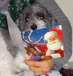 Did you see this great Christmas card Misaki sent me? I'm reading it now!