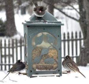 You can always tell from the plumpness of the birds just how cold it is!