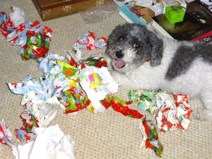 Look at all the pretty paper presents I've collected!