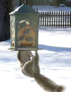 The food is always yummier on the other side of the feeder!