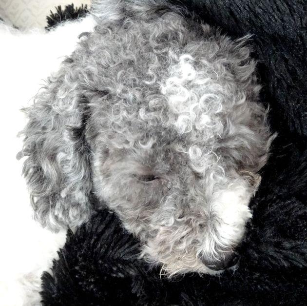 Dozing Daisy.