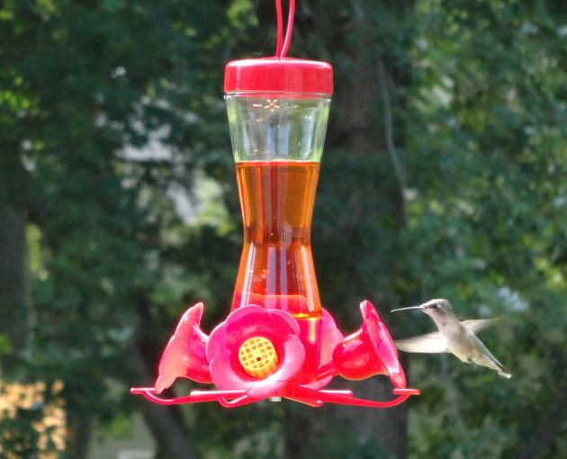 Hummingbirds!