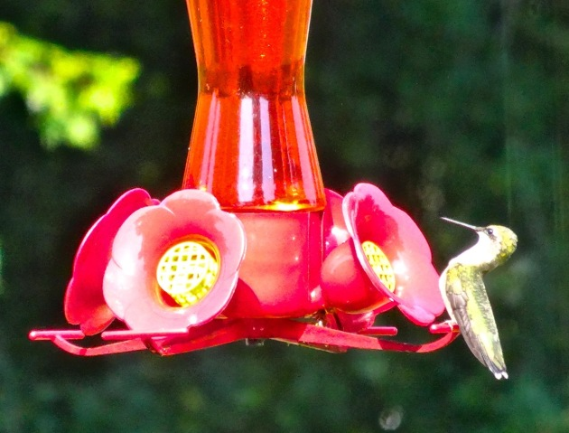 hummingbird 8.15 2