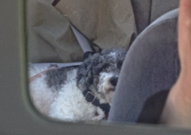 One happy, pooped pup as seen through the car's vanity mirror. :)