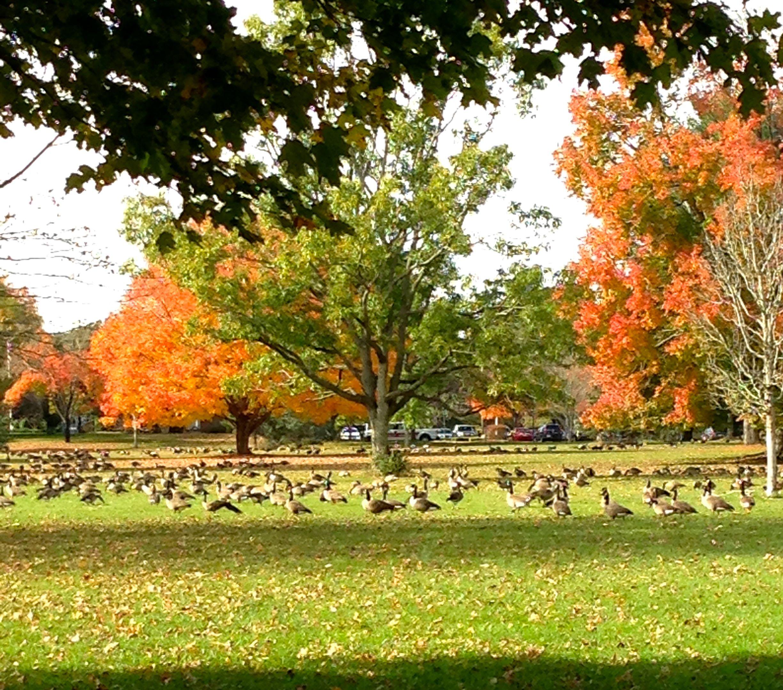 Autumn/Fall   Everyday Adventures in Havachon Heaven Havachon
