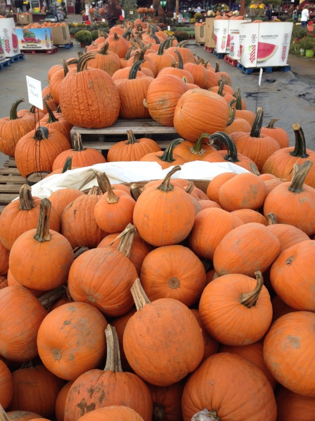 pumpkins at farm