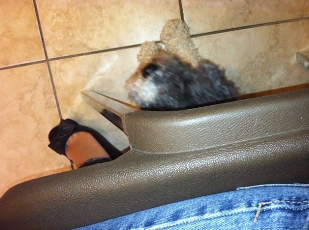 That's ME hiding under the chair in the vet's waiting room. It was no use...they found me anyway. :(