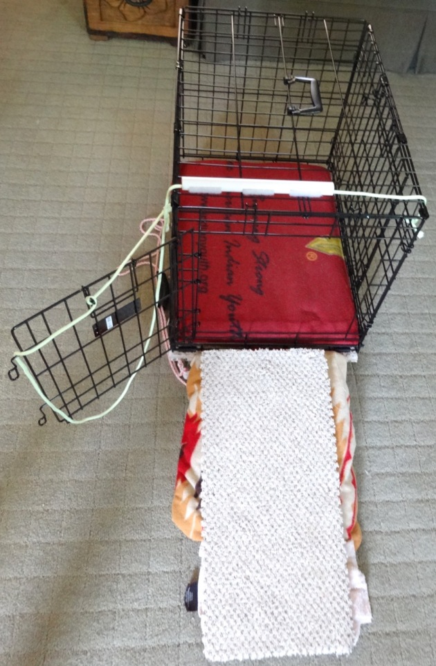 Daisy's famous crate, with a Tempurpedic foam bed covered with soft, warm fleece. And a custom-built (by DH) ramp with support underneath. Is that enough to keep her safe, do you think?