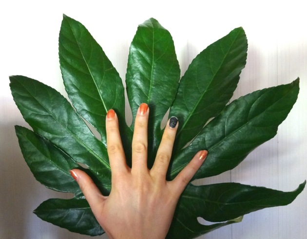 That is one huge leaf!