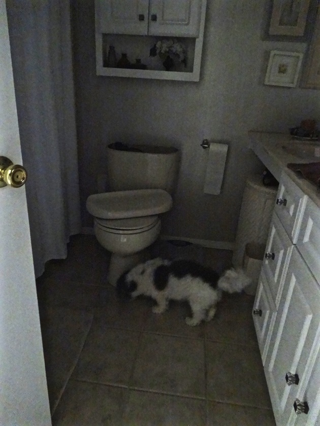 """I'll stand guard here and make sure this toilet doesn't get any wise ideas while Daddy's gone."""